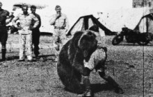 Wojtek - niedźwiedź, który poszedł na wojnę!