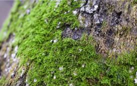 Zielona strona – płuco prawicy