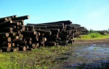 Lasy Państwowe czekają dobre czasy. Wszystko przez wzrost cen drewna