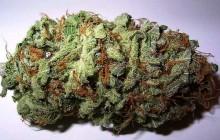 Marihuana legalna na Alasce!
