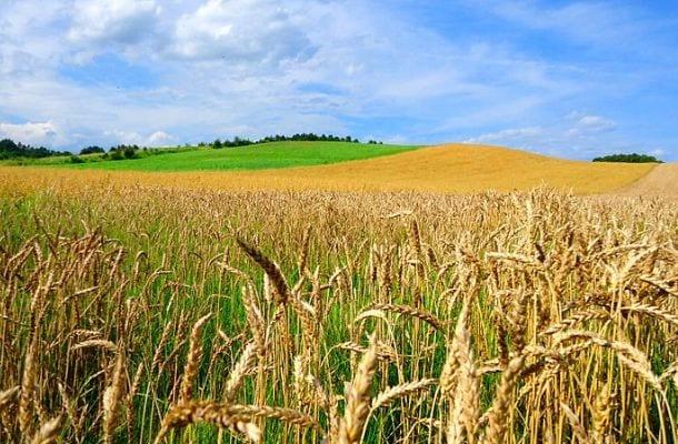 Rusza jesienna kampania sprzedaży ubezpieczeń rolnych