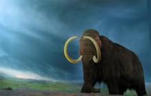 W Wodzisławiu Śląskim znaleziono cios mamuta