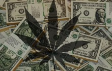 Podatki ze sprzedaży marihuany zostaną przeznaczone na edukację