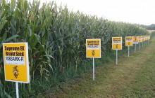 Rosja wprowadzi zakaz importu amerykańskiej kukurydzy i soi