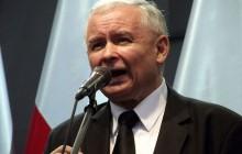 Kaczyński chce zmiany przepisów dotyczących wycinki drzew.