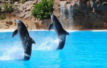 Delfiny nadają sobie imiona? Są nowe badania
