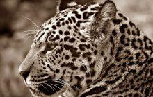Ogromne wymieranie gatunków na Ziemi? Sięga 52 procent