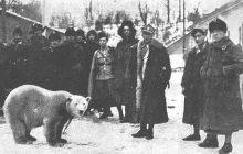 Nie tylko Niedźwiedź Wojtek. Poznajcie niedźwiedzicę, która salutowała Piłsudskiemu!