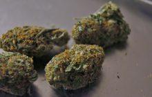 Kolejne państwo legalizuje medyczną marihuanę!