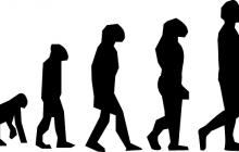 PiS usunął teorię ewolucji z wymagań obowiązkowych w szkołach podstawowych