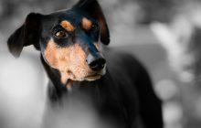 Będą radykalne zmiany w prawach dotyczących zwierząt?