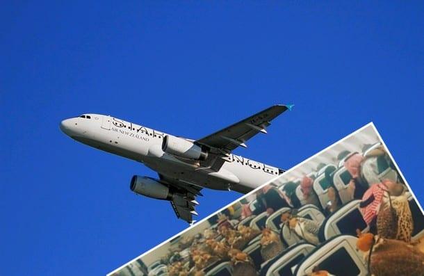 Nietypowi pasażerowie samolotu.