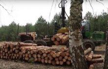 Manipulacja ustawą o wycince drzew. Dotyczy tylko terenów prywatnych. Lasów w Polsce przybywa [WIDEO]
