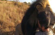 To nagranie podbija media społecznościowe. Przyjaźń między człowiekiem a dzikim zwierzęciem jest możliwa! [WIDEO]