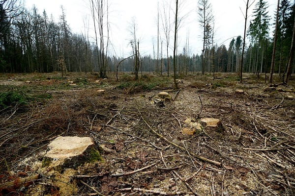 Ponad 1,1 mln zł kary za wycinkę drzew bez zgłoszenia! Chodzi o działalność gospodarczą