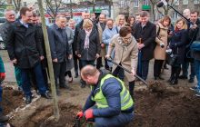 Publicyści komentują sadzenie drzewek przez PO: