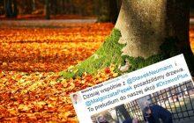 Politycy PO chwalą się posadzeniem drzewa. Internauci zwrócili uwagę na jeden szczegół.