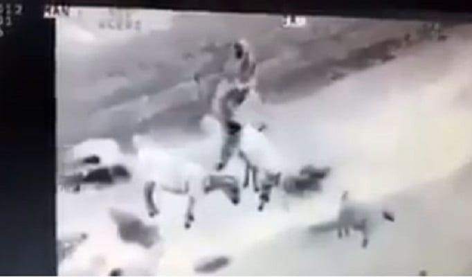 Amerykański dron zwiadowczy nagrał dwóch Afgańczyków. Przyłapał ich w dwuznacznej sytuacji z osłami? (+18)