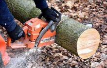 Będą zmiany w ustawie o wycince drzew. Komisja poparła poprawkę. PiS zaostrzy przepisy