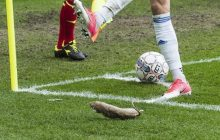 Dania: Rzucali martwymi szczurami w zawodników przeciwnej drużyny