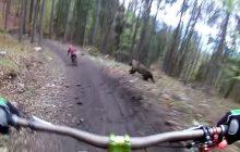 O włos od tragedii w słowackim parku rowerowym. Wszystko za sprawą niedźwiedzia! [WIDEO]