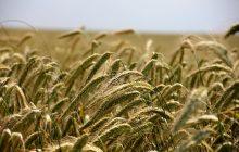 Resort rolnictwa odpowiada PSL: Dopłaty dla rolników niezagrożone