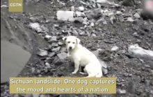 To nagranie poruszyło świat. Pies czeka na właściciela w miejscu tragedii! [WIDEO]