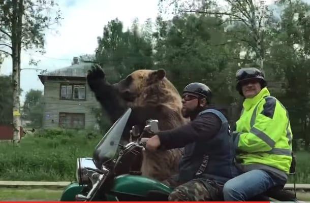 Takie rzeczy tylko w Rosji! Niedźwiedź... jedzie motocyklem i macha do ludzi [WIDEO]