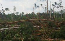 Potężna trąba powietrzna na Śląsku. Hektary lasów zniszczone [WIDEO]
