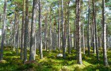 Największa katastrofa w historii Lasów Państwowych? Rzeczniczka powiedziała, ile będą odrastać drzewa po nawałnicach!