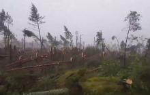 Tysiące hektarów lasów zniszczone. Według ekologów... nic się nie stało.