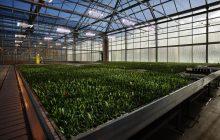 Rolnictwo wspomagane światłem LED