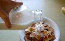 Lubisz mleko? Możesz być... rasistą! Tak twierdzi duża organizacja walcząca o prawa zwierząt