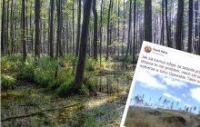 To zdjęcie powinni zobaczyć ekolodzy. Tak wygląda las, który padł ofiarą kornika [FOTO]