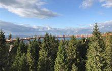 Wspaniała ścieżka ponad drzewami powstała tuż obok polskiej granicy. Piękna panorama na Tatry! [WIDEO]