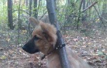 Kobieta w bestialski sposób przypięła szczeniaka do drzewa i skazała go na pewną śmierć. Dzięki internautom udało się ją zatrzymać! [FOTO]