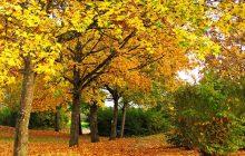 W przyszłym tygodniu zawita złota jesień. Temperatura przekroczy 20 stopni Celsjusza!