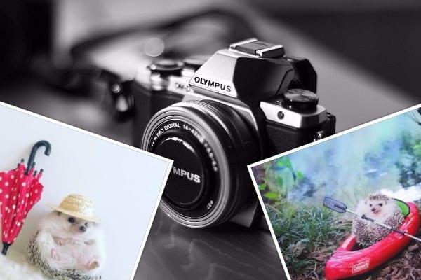 Ten mały jeżyk podbił serca internautów. Profil z jego zabawnymi zdjęciami obserwuje tysiące osób! [FOTO]