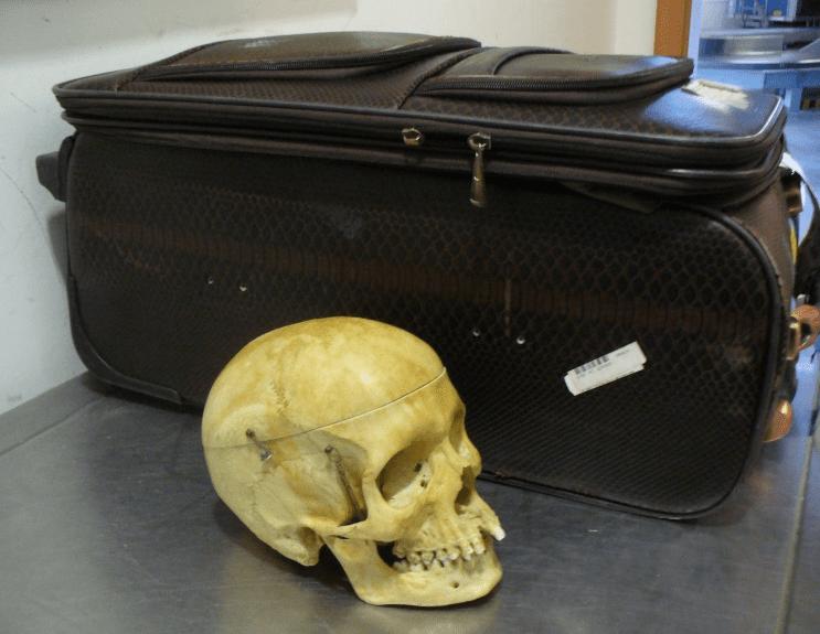 czaszka2