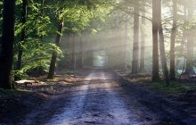 Niemiecki sąd zezwala na wycinkę ogromnych połaci lasu. Powód? Więcej miejsca dla kopalni węgla!