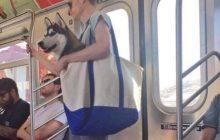 Władze Nowego Jorku zakazały wprowadzania psów do metra. Mieszkańcy znaleźli sposób na obejście tego przepisu. To trzeba zobaczyć!