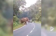 Słoń stratował mężczyznę, który próbował zrobić mu zdjęcie. Nikt nie pomógł. Dramatyczne nagranie trafiło do sieci [WIDEO]