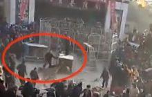 Tygrys uciekł z klatki w cyrku i rzucił się na widzów! Jest wstrząsające nagranie [WIDEO]