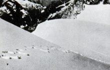 Naukowcy rozwiązali tajemnicę Yeti! Oto, co odkryto w Himalajach
