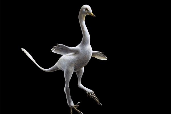 Ten niezwykły dinozaur został nazwany na cześć polskiej uczonej [FOTO]
