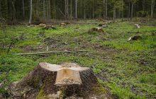 Resort Środowiska wysłał odpowiedź ws. Puszczy Białowieskiej.