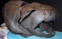 Świętokrzyskie: Naukowcy odkryli szczątki gigantycznych ryb pancernych. Ten gatunek osiągał do 20 metrów długości