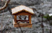 Biolodzy ostrzegają: Ostrożnie z dokarmianiem ptaków zimą