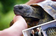 Właściciele odnaleźli żółwia pół roku od ucieczki! Jak daleko dotarł?