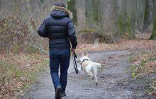 Belgijski polityk chce wspólnych grobów dla ludzi i zwierząt